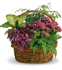 Secret Garden Basket from Boulevard Florist Wholesale Market